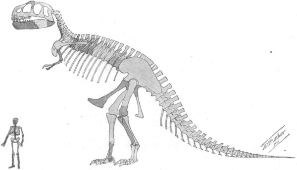 Before Assembling the Dinosaur, an image from William D. Matthew with Osborn's description paper.