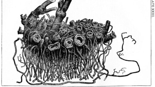 A black and white drawing of a rhizome, which some take to symbolize Spinozism.
